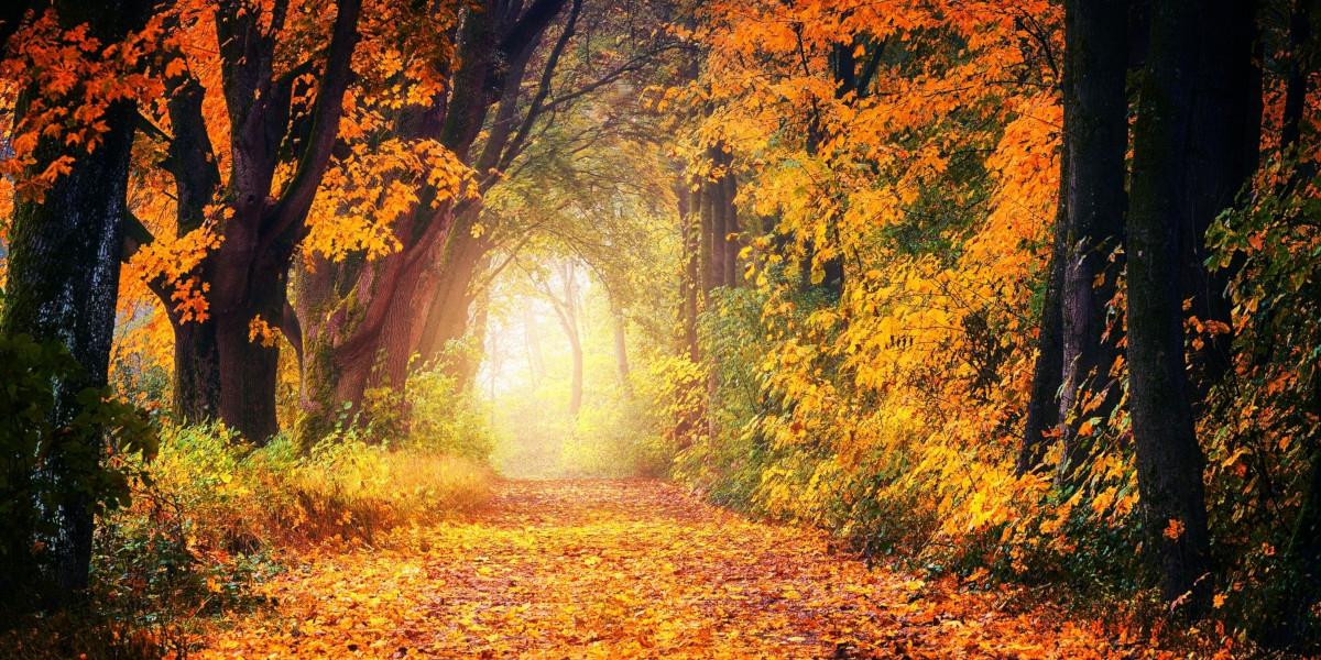 Lebensfreude: Dein Lebensweg
