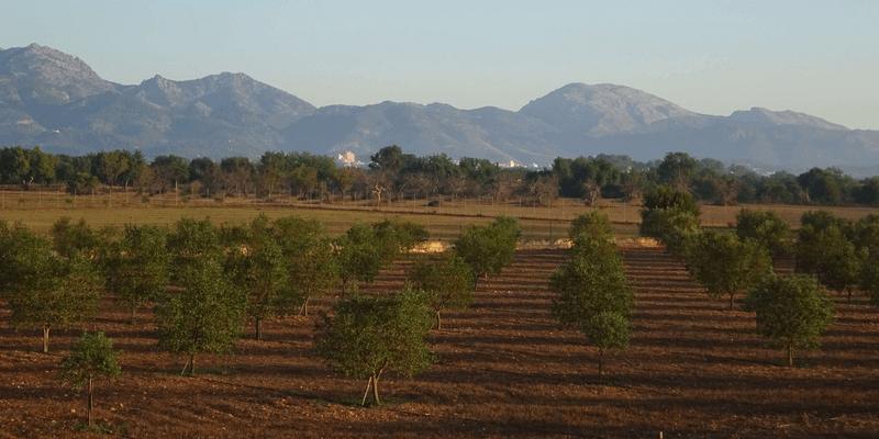 Change Your Life Mallorca