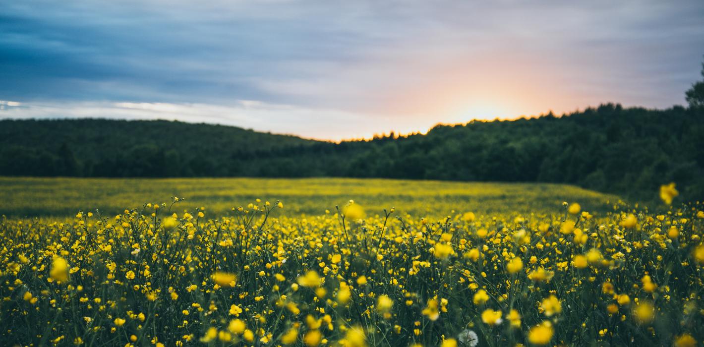 Allergien auflösen mit NLP